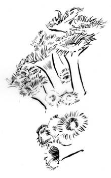 Illustration - Line triptych - Anemones