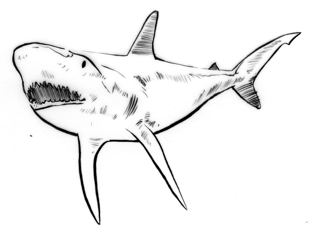 Line Art Shark : Illustration line triptych shark by thelipglossary on