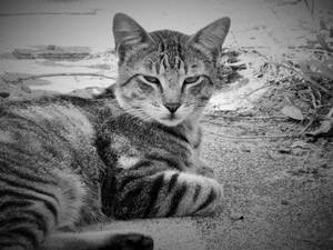 Photography: Just let me sleep already! by vt2000