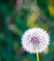 Photography: Flower 21