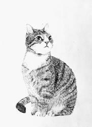 Pencil: Cat