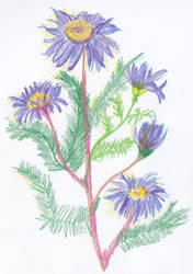 Purple Daisies by MiaDevlin69