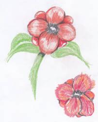 Poppies by MiaDevlin69