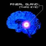 Pineal Gland (third eye)