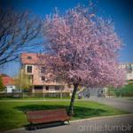 Spring by carnedepsiquiatrico