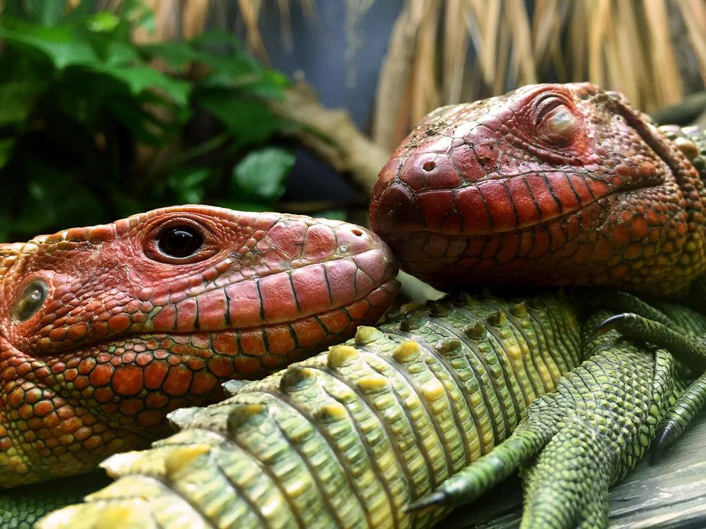 Lizard Kiss by AlyOh on DeviantArt