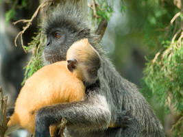 mammal 002 by jitspics