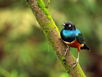 bird 023 by jitspics