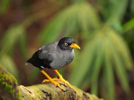 bird 024 by jitspics