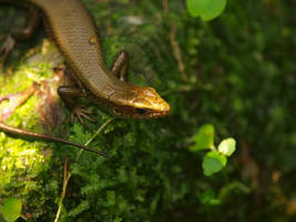 reptile 013 by jitspics