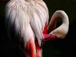 bird 025 by jitspics