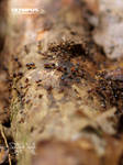 Termites by jitspics