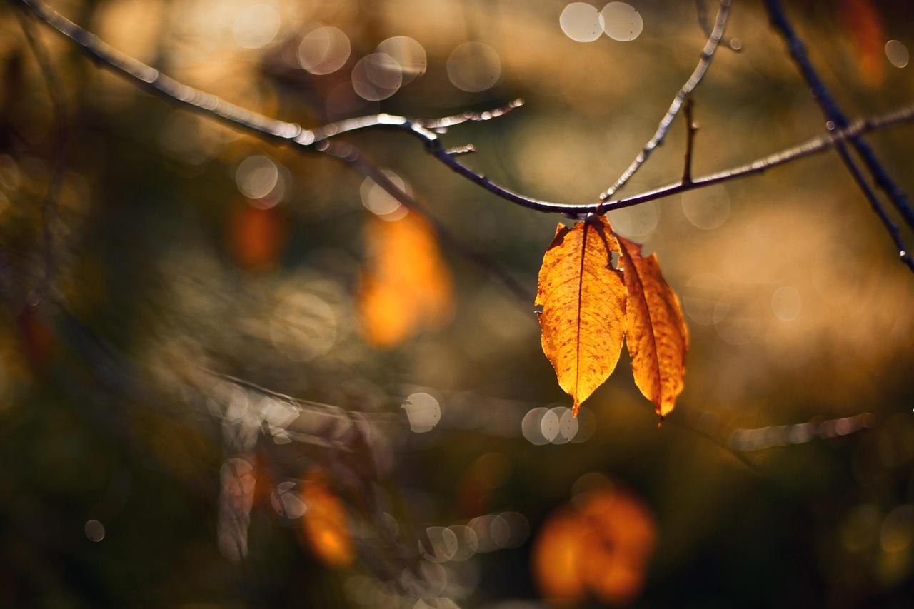 november I by Sternentaucher