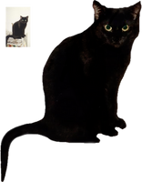 Black Cat by magicsart