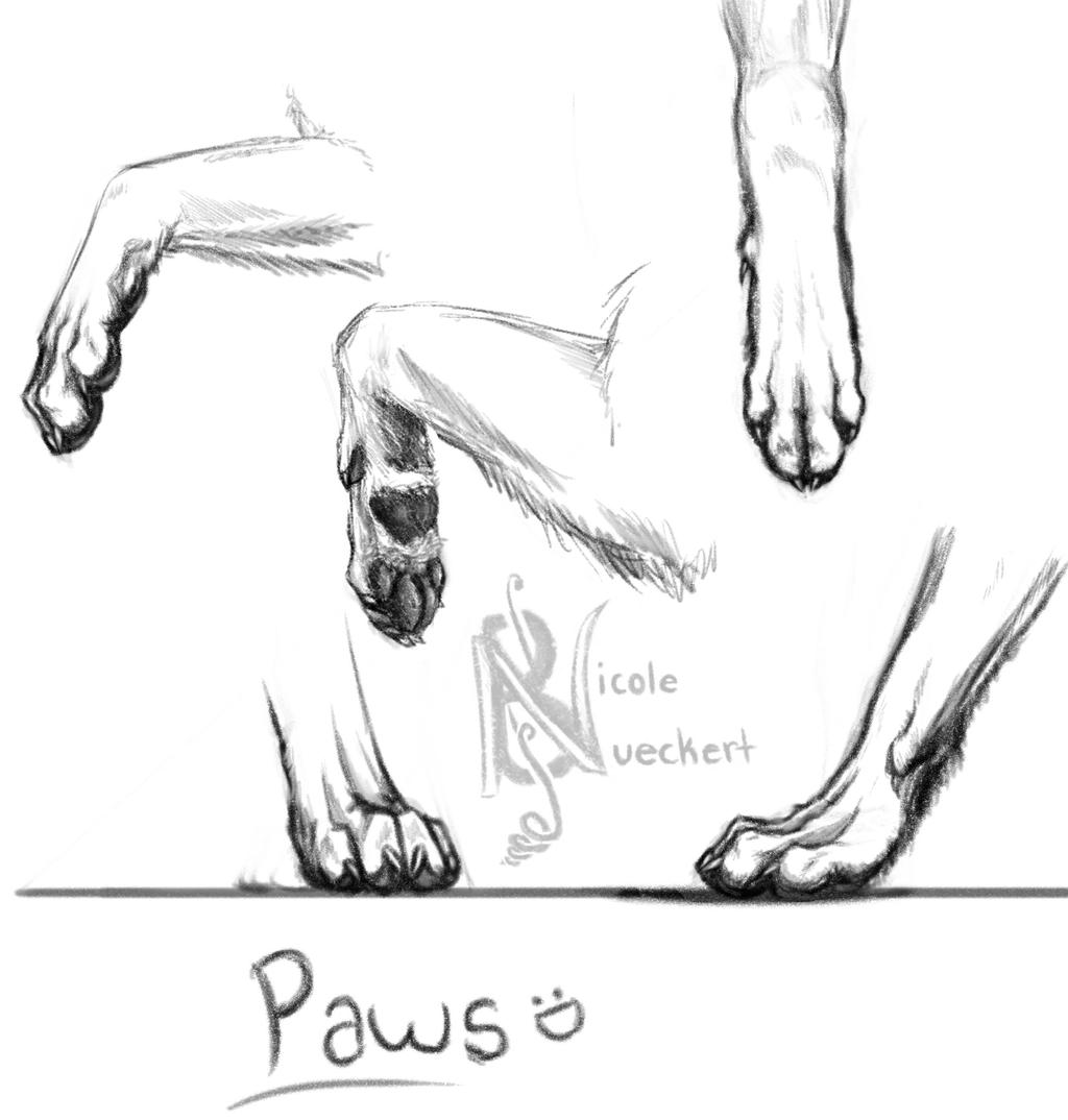 How To Draw Wolf Paws Print Photo#27