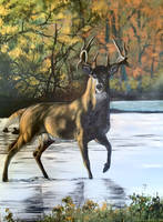 Acrylic Buck by Kuvari