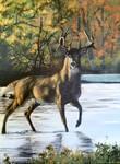 Acrylic Buck