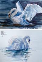 Watercolour Studies: Swans by Kuvari