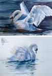 Watercolour Studies: Swans