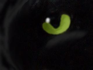 Eye of the Wolf by AvatarKataraToph