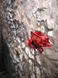 -Winter dreams: Lady in red- by Araverta