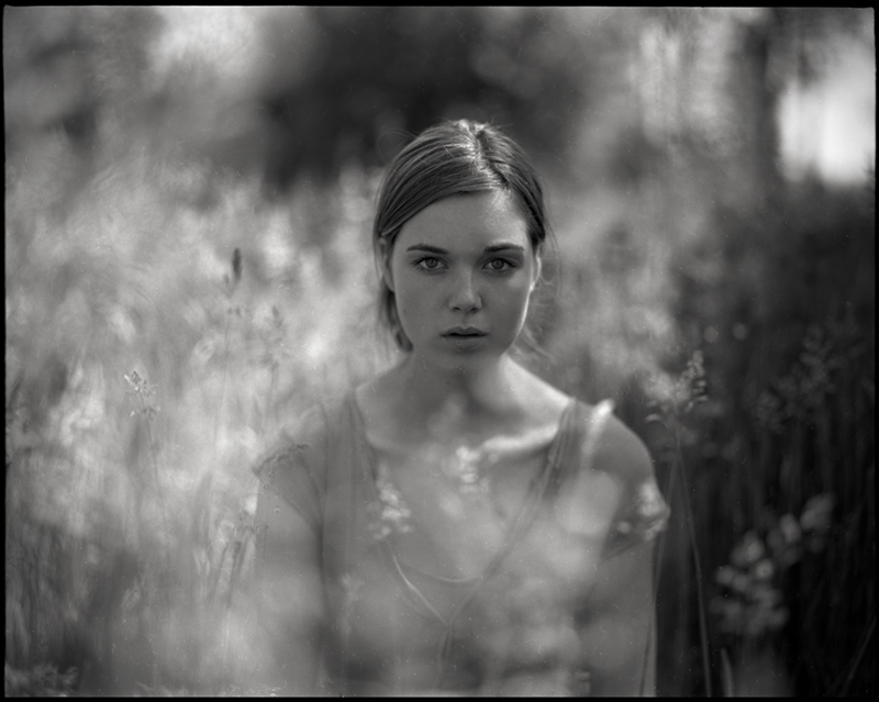 dandelion by micmojo