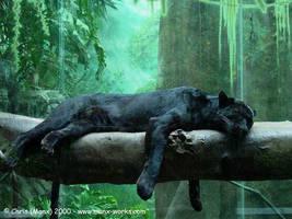 Black Jaguar by Manx-Works