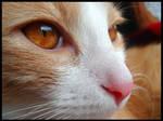 Through the Cat's eyes