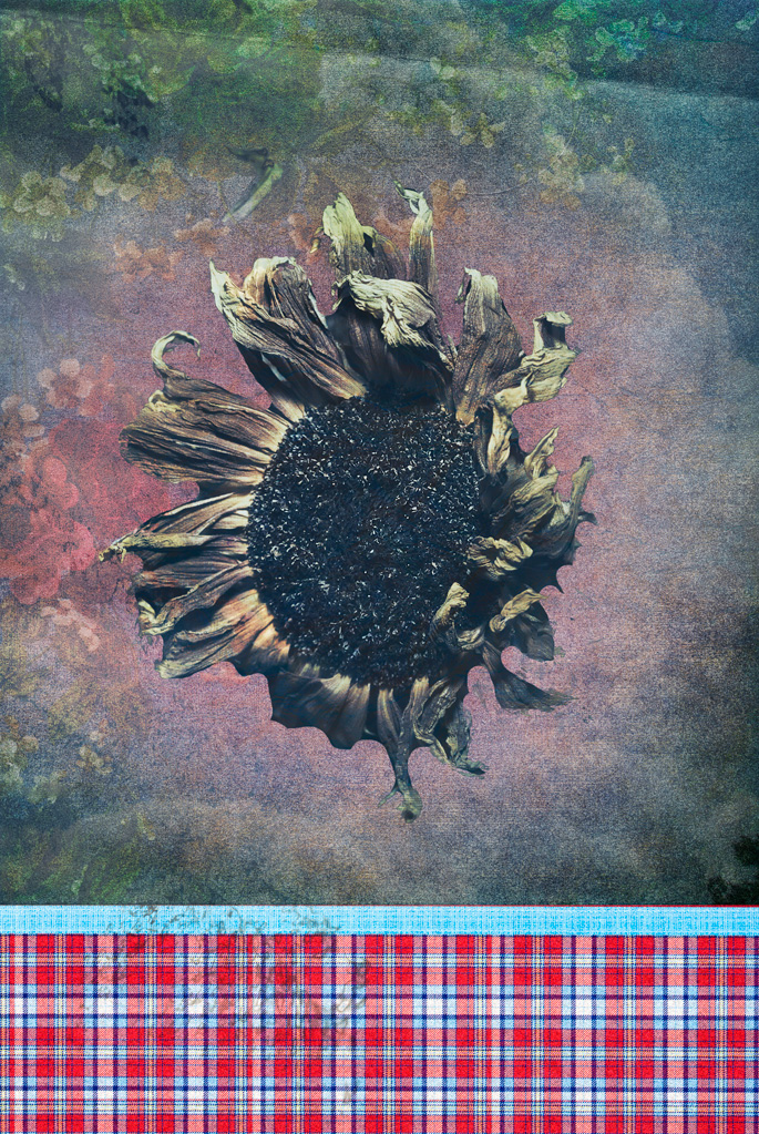 SunflowerPaper by tea