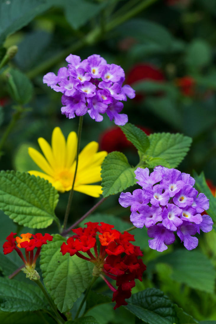 flowersPRY by tea