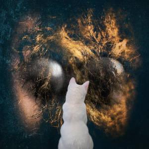 cat withWallArt