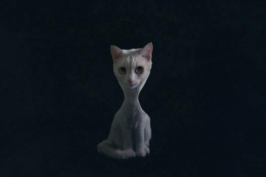 Surreal Cat 01