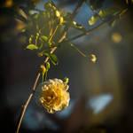 springFlower web by tea