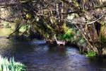 Deer in river by tea