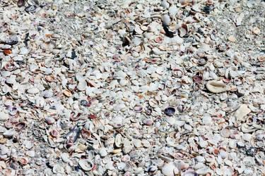 Sea Shells by DavidDeFino