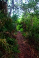 Tropical Path by DavidDeFino