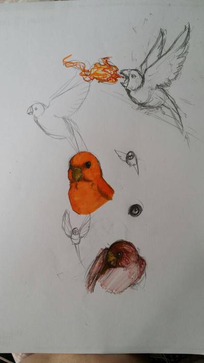 Budgie doodles  by WolfOfDarkness12