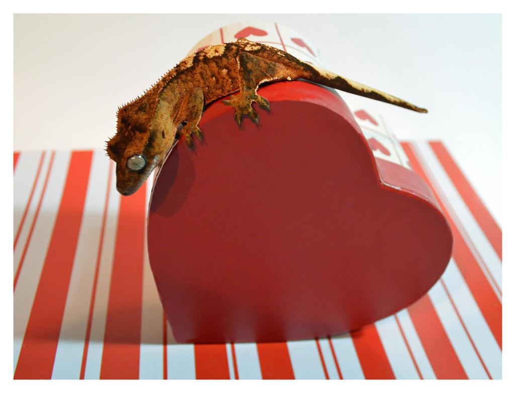 Valentine's Valentine by Tikuu10