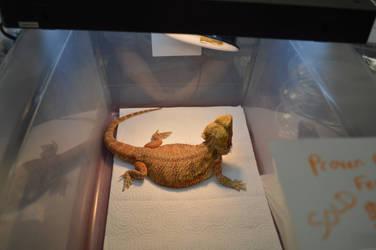 one big Dragon by Lizardspirit
