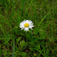 Flower power 1/3