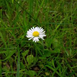 Flower power 1/3 by Nalivo