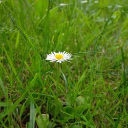 Flower power 2/3 by Nalivo