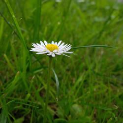 Flower power 3/3 by Nalivo