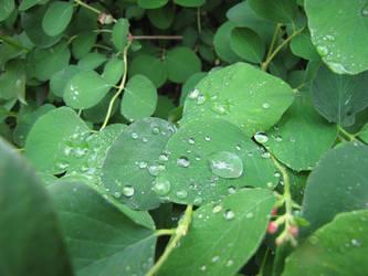 Crying bush 1/4 by Nalivo