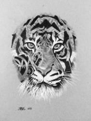 Tiger by Expansions