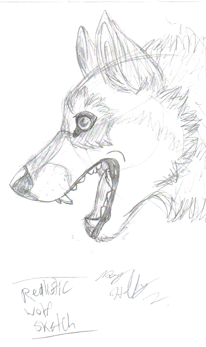 wolf sketch templates