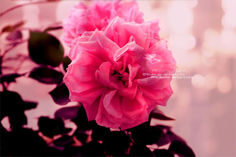 ::Softness:: by Bntuae
