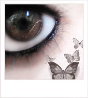 ::Butterfly Eye::