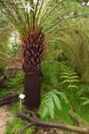 palms and fern flora