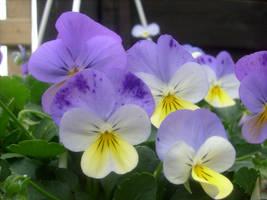 horned violet 2 by ingeline-art